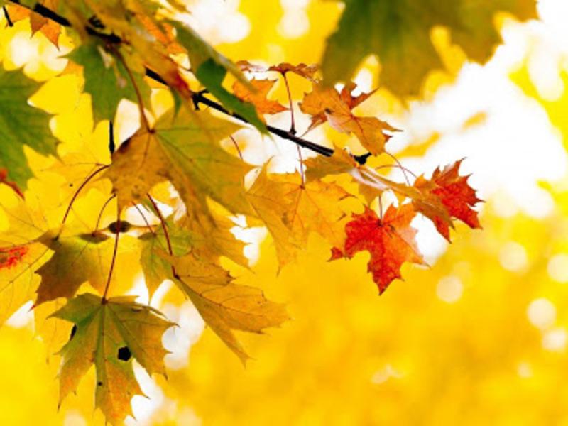 14 октября - выходной